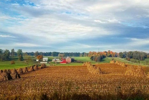 Agricultural landscape in Wayne, County